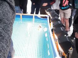 Wyścigi łódek solarnych -dwie wygrane